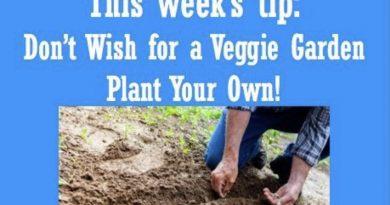 Wellfie Wednesday Blog Post: Don't Wish for a Veggie Garden - Plant Your Own