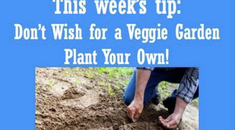 Wellfie Wednesday Blog Post: Don't Wish for a Veggie Garden - Plant Your Own