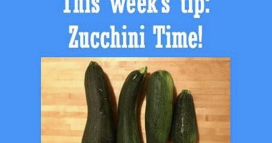 Wellfie Wednesday Blog Post: Zucchini Time