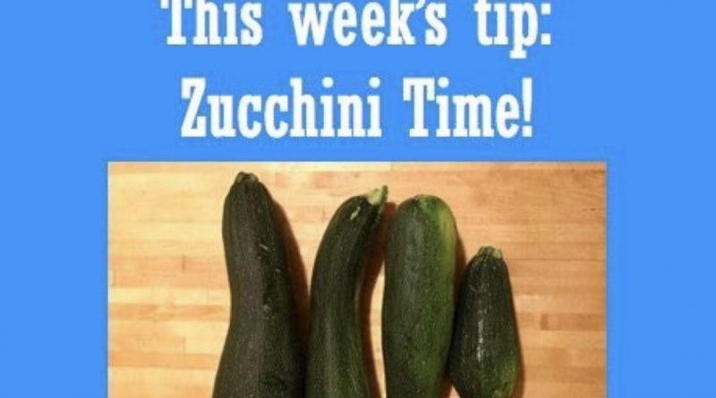 Wellfie Wednesday Blog Post: Zucchini Time